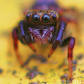 Young Jumping Spider by Dorothy Pugh