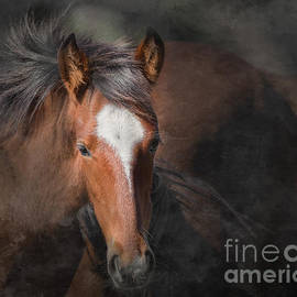 Young Stallion by Lisa Manifold