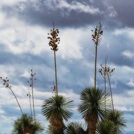Yucca  by Saija Lehtonen