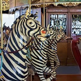 Zebra Row by Alana Thrower
