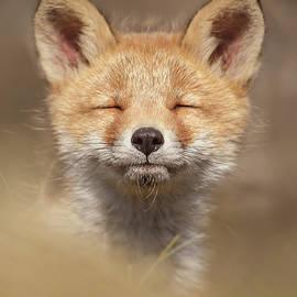 Zen Fox Series - Zen Fox Baby by Roeselien Raimond