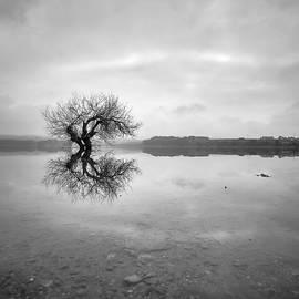 Zen Tree. . BW. Square by Guido Montanes Castillo