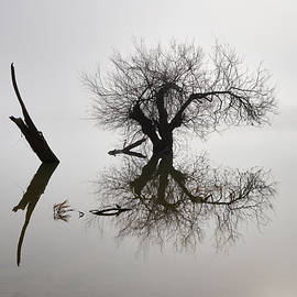 Zen tree. Foggy sunrise at the lake  by Guido Montanes Castillo
