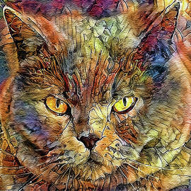 Ziggy The Tom Cat by HH Photography of Florida