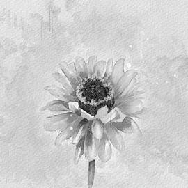 Zinnia in Black and White by Mary Timman