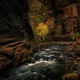 Zion Narrows Icy cold Fall shadows by Richard Bryant
