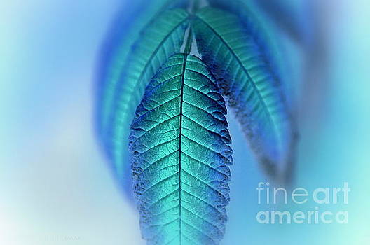 Blue by Annie Lemay