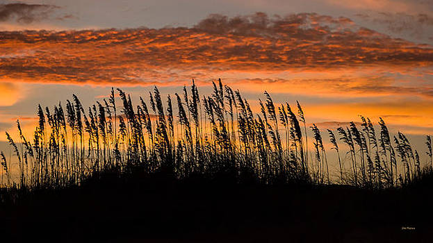 Cape Hatteras sea oats at dawn. by John Pagliuca