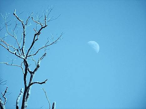 Day Moon by Edwin Newman