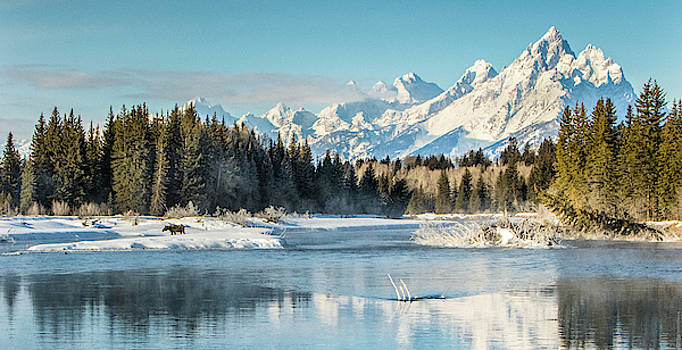 A Moose In Grand Teton National Park by Charlie James