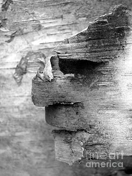 Birch Bark Man by Chris Sotiriadis