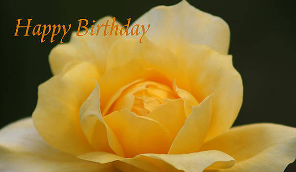 Birthday Rose by Marna Edwards Flavell