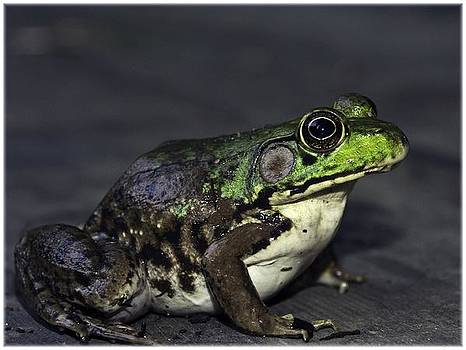 Frogger by Vincent Dwyer