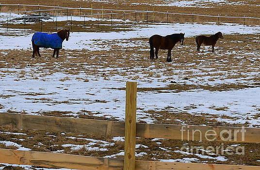 Horses three by Nancie DeMellia