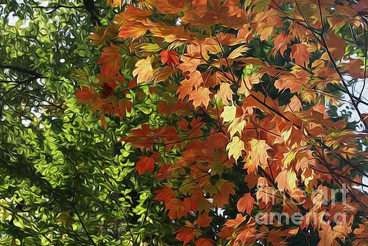 Leaves by Nur Roy