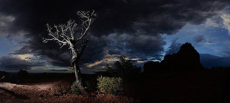 Mesquite Tree In Stormy Weather by Raul Touzon