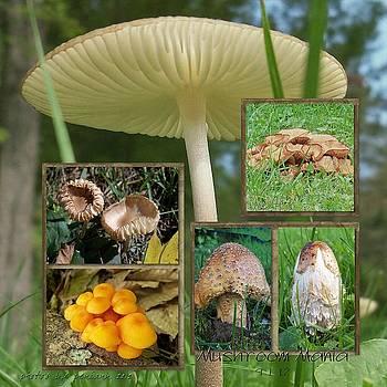 Mushroom Mania by Penny McClintock