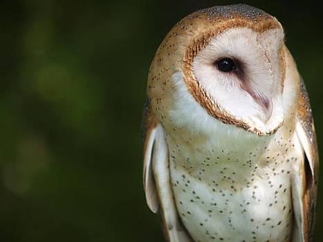 Owl by Tiffany Swanson