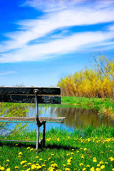 PondSide View by Amy Schauland