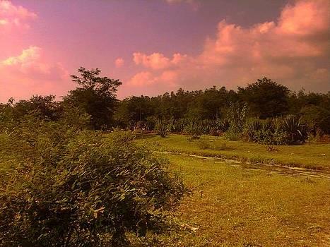 Purple Sky by Salman Ravish