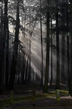Sunrays Through the Fog #2 by Don Herd