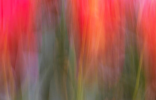 Tulip Waves by Marion McCristall