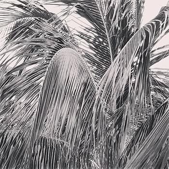 Instagram Photo by Kurt Iswarienko