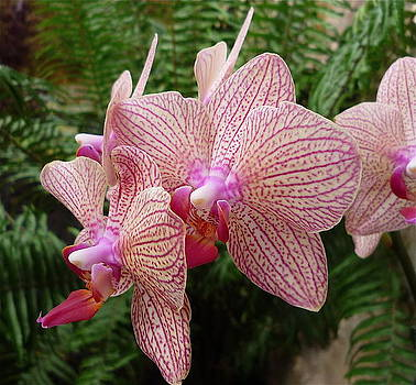 Orchid No.7 by Gregory Young