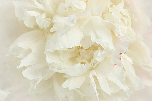 Perfect peony by Kitty Ellis