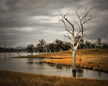 Solitary Tree by Tony Steinberg