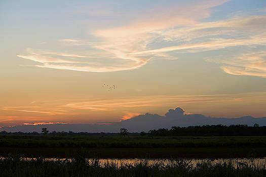 Sunrise Over Kaziranga National Park by Steve Winter