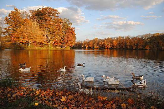 Autumn Beauty by Anna Liza Jones