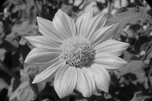 Flower by Donna Desrosiers
