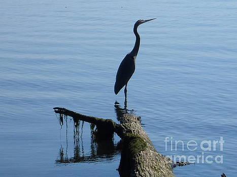 A Blue Heron by Stacy Frett
