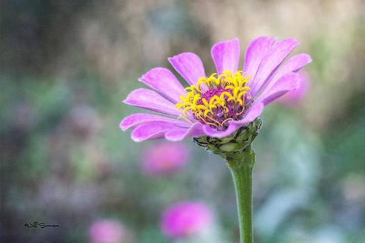 A Flowers Beauty by Jeff Swanson