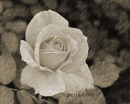 A Rose is a Rose...... by Penny McClintock