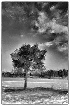 A Tree in Winter by SM Shahrokni
