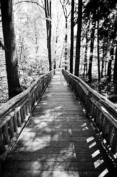 A Wooded Walk by Leah Kimper