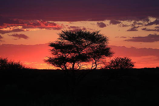 Africa Sunset by Gordon Donovan