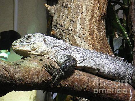 Am a reptile. by Ann Fellows