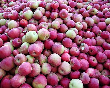 Apple Harvest by Brooke Finley