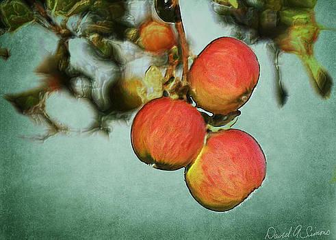 Apples by David Simons