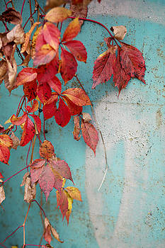 Autumn Contrasts by Vaida Abdul