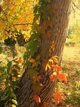Autumn by Cora Brum