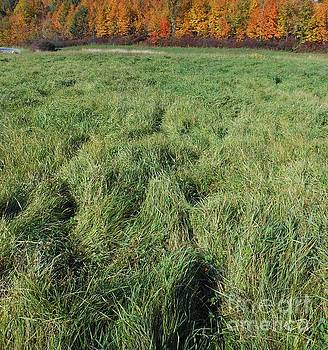 Autumn Grass by Beebe  Barksdale-Bruner