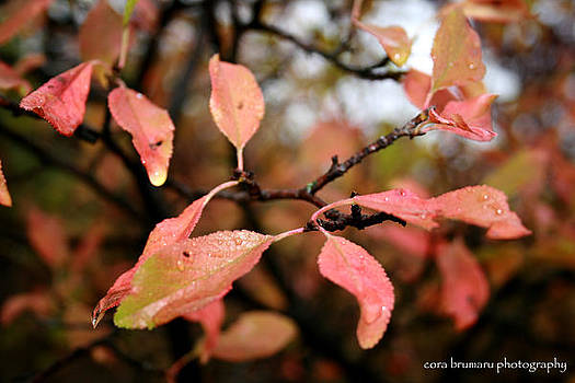 Autumn leaves by Cora Brum