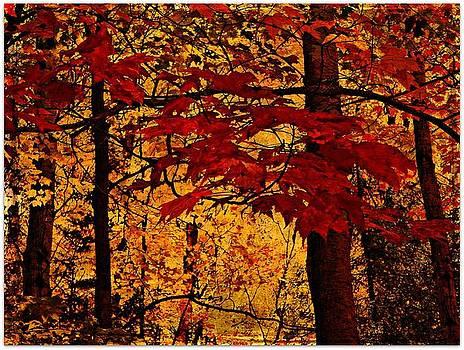 Autumn Mosiac  by Dianne  Lacourciere