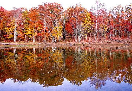Autumn Reflections by Michelle Wiltz