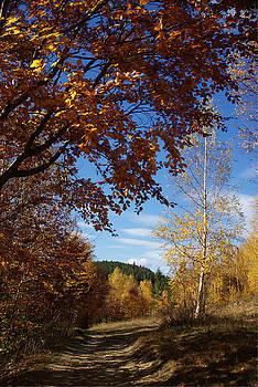 Autumn Road by Bogdan M Nicolae