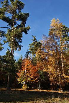 Autumn Scene by Bogdan M Nicolae